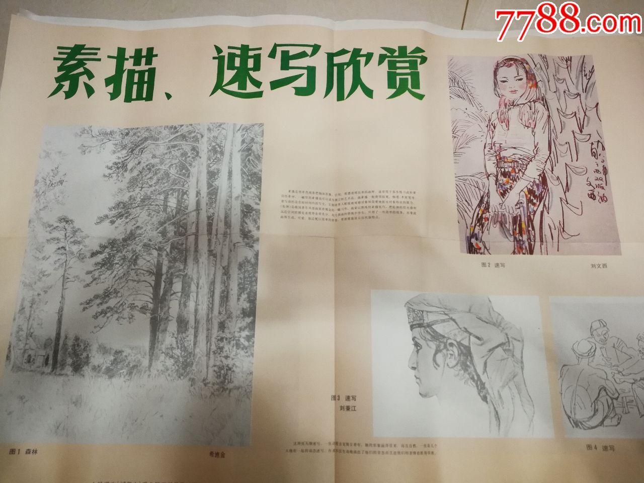 森林步骤美术教学挂图速写小学、画片(素描、可以遮斑v森林的具体课本图片