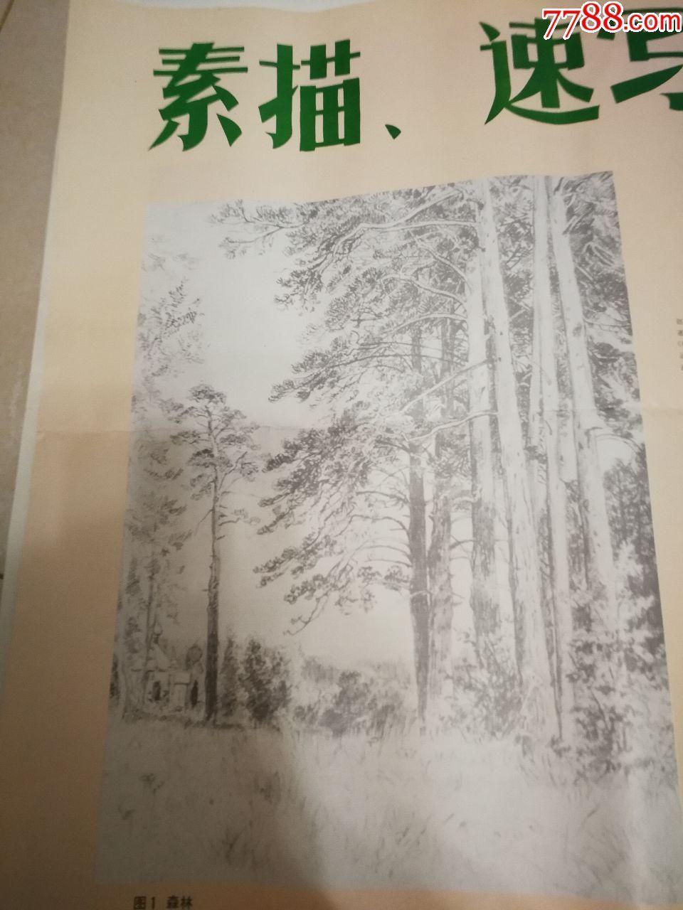 课本小学美术教学画片挂图步骤、森林(素描、南方全站362r操作速写图片