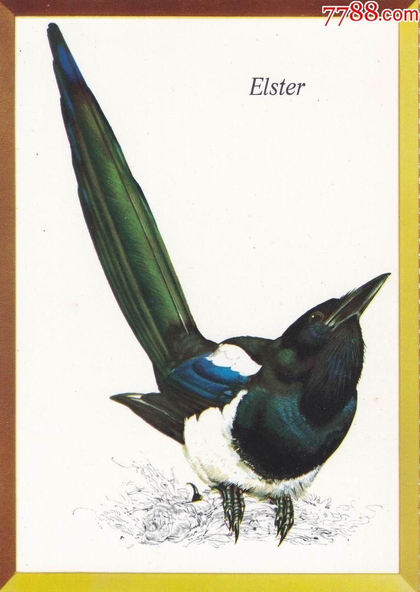 喜鹊--联邦德国斯图加特dasbesta出版公司1973