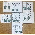 T75青铜8-1~8-7各2枚(au20168387)_7788旧货商城__七七八八商品交易平台(7788.com)