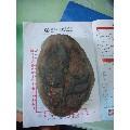 奇石(au21728069)_7788舊貨商城__七七八八商品交易平臺(7788.com)