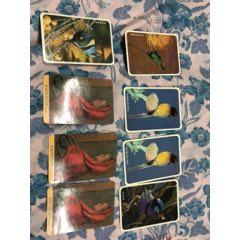 雅典美術5張斗篷女孩3張卡共8張