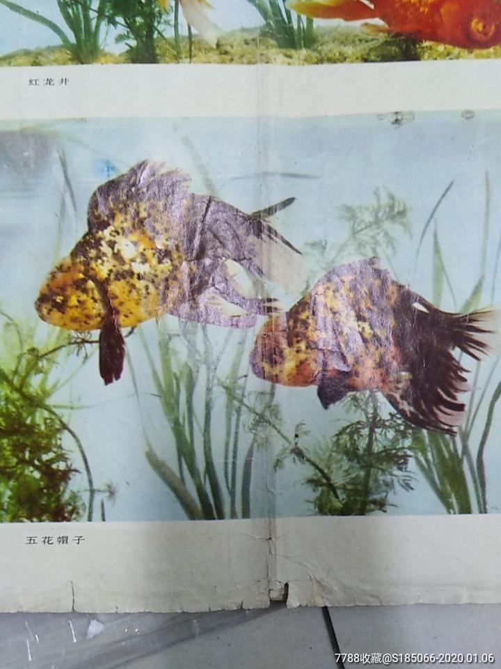 年画-金鱼_价格10元_第3张_