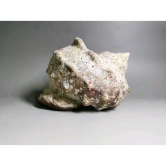 天然海螺,有一定的年分了,表面鈣化,有一磕碰如圖(au25293038)_7788舊貨商城__七七八八商品交易平臺(7788.com)