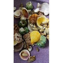 天然貝殼海螺殼手工diy魚缸造景珊瑚貝殼畫裝飾標本卷貝魚寄居蟹(au25386683)_7788舊貨商城__七七八八商品交易平臺(7788.com)