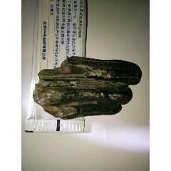 估計遠古大型蕨類植物化石(au25412354)_7788舊貨商城__七七八八商品交易平臺(7788.com)