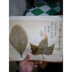 天然葉雕藝術(au25490069)_7788舊貨商城__七七八八商品交易平臺(7788.com)