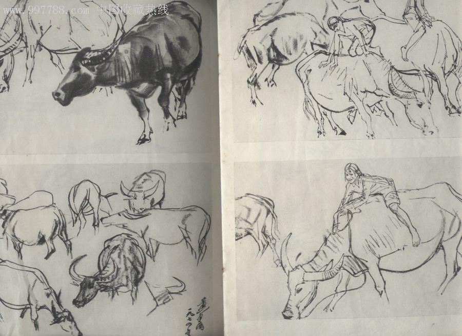 字画36种动物图