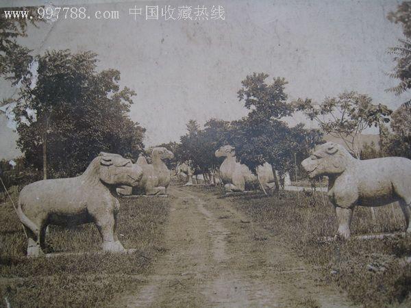 民國風景建筑老照片:神道石獅石駱駝明信片大小