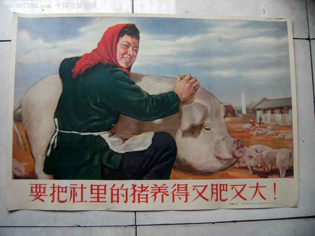 猪弟一性交_要把公社里的猪养的又肥又大